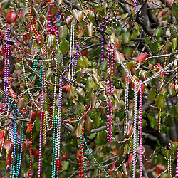 February 21, 2012; New Orleans, LA, USA; Beads hang from tree limbs during the Krewe of Zulu parade as it rolled along the uptown New Orleans St. Charles Avenue parade route throwing beads, painted coconuts and various trinkets on Mardi Gras day. Mardi Gras is an annual celebration that ends at midnight with the start of the Catholic Lenten season which begins with Ash Wednesday and ends with Easter. Photo by: Derick E. Hingle
