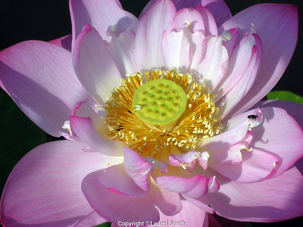 flower photography by laurel smith  moving light gallery, Beautiful flower