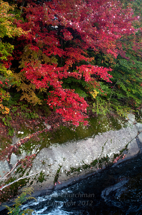 Scarlet maple with stone formation on bank of Browns River, Jericho, Vermont
