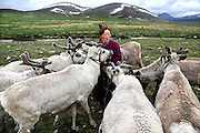 Stunning images reindeer herders of Mongolia<br /> <br /> Tsaatan people are reindeer herders and live in northern Kh&ouml;vsg&ouml;l Aimag of Mongolia. Originally from across the border in what is now Tuva Republic of Russia,the Tsaatan are one of the last groups of nomadic reindeer herders in the world. They survived for thousands of years inhabiting the remotest Ulaan ta&iuml;ga, moving between 5 and 10 times a year. <br /> The reindeer and the Tsaatan people are dependent on one another. Some Tsaatan say that if the reindeer disappear, so too will their culture. The Tsaatan depend on the reindeer for almost, if not all, of their basic needs:  their reindeers provide them with milk, cheese, meat, and transportation. They sew their clothes with reindeer hair, reindeer dung fuels their stoves and antlers are used to make tools. They do not use their animals for meat. This makes their group unique among reindeer-herding communities. As the reindeer populations shrink, only about 40 families continue the tradition today. Their existence is threatened by the dwindling number of their domesticated reindeer. Many have swapped their nomadic life for urban areas. <br /> <br /> Towards the end of June 2014, I rode out with my companions across the ta&iuml;ga (the distinctive coniferous evergreen forest of subarctic lands) from the village of Tsagaan-Nuur, near Kh&ouml;vsg&ouml;l lake, and visited a small nomadic Tsaatan community, just after they had settled into their summer camp. With a climate that is cold all year round, open grasslands spread across the high steppe in Mongolia, and at 2,300m there was often a fresh breeze. Reindeer cannot handle heat well, so they must be pastured higher up during the warmer months.<br /> &copy;Pascal MANNAERTS/Exclusivepix Media