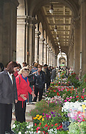 Spring flower market in florence, Italy