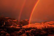 A double rainbow highlights the Bear Canyon area in the Santa Rita Mountains, Coronado National Forest, Sonoran Desert, Tucson, Arizona, USA.