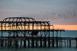 © Licensed to London News Pictures. 04/01/2017. Brighton, UK. A murmuration of Starlings in the Brighton Sky at sunset over the remains of the Brighton West Pier. Photo credit: Hugo Michiels/LNP