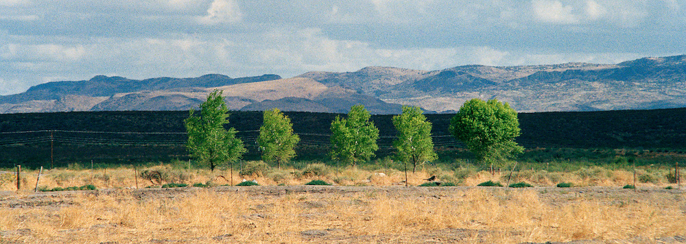 "Panoramic view of mountains in the distance and 5 contrasting trees in the foreground in Balmorhea, Texas. NOTE: Click ""Shopping Cart"" icon for available sizes and prices. If a ""Purchase this image"" screen opens, click arrow on it. Doing so does not constitute making a purchase. To purchase, additional steps are required."