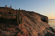 Cardon cacti overlook Sea of Cortez at sunrise; Isla San Esteban, Baja, Mexico.