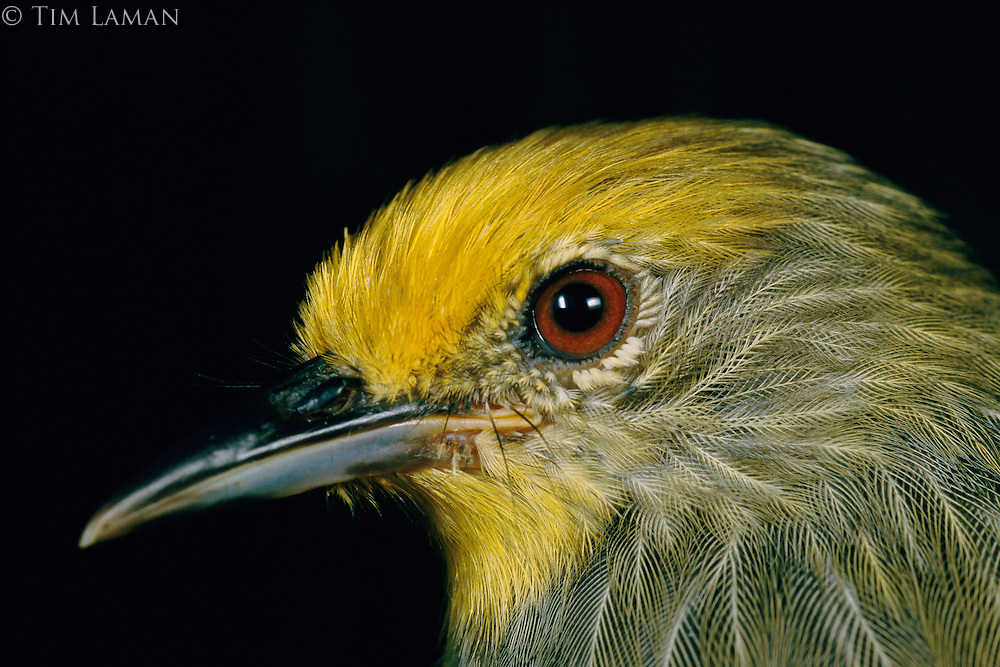 A close view of the head of a bird.