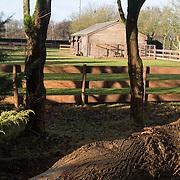 NLD/Bussum/20131219 - Perspresentatie nieuwe real life soap Utopia, Verblijf van de dieren