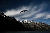 Bird through the mountains of Lake Huapi.