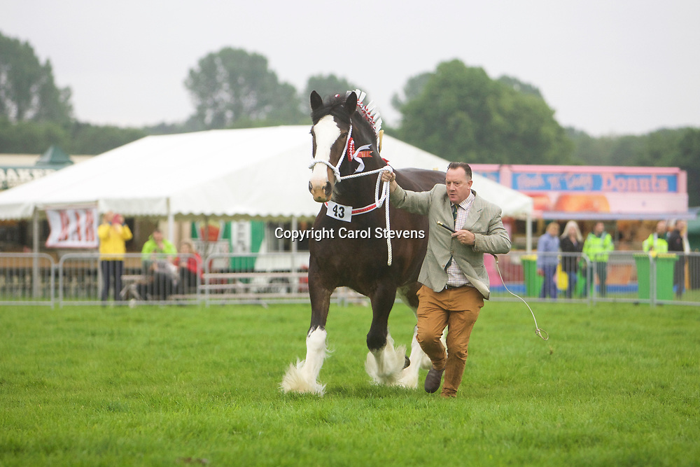Martin Fountain and WOODHOUSE CALENDAR GIRL<br /> Supreme Shire Show Champion