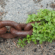 Rusty chains and link, fastened to a pier, among the fishing boats of Rockport, Massachusetts