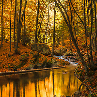 Completely amazing autumn scene in the forest with a river and foliage