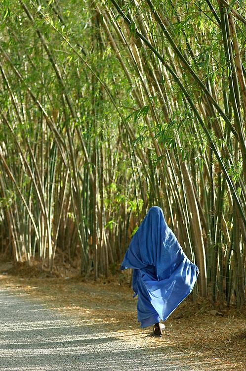 Bamboo Avenue, Hotel Gazelle d'Or, Taroudant, Morocco