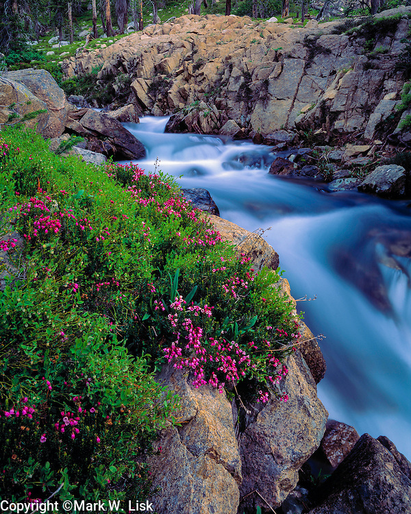 Heather blooms on the edge of fast moving Boulder Creek in the White Cloud mountains of central Idaho.