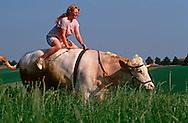 DEU, Deutschland: Hausrind (Bos taurus), Bauerstochter Marlene reitet auf ihrem Rennochsen Falko durch die Felder, Falko ist ein Ochse von 24 Zentnern und nimmt an Ochsenrennen teil, Marlene trainiert und reitet ihn, Rasse: Fleckvieh, Bayern, Süddeutschland | DEU, Germany: Domestic cattle (Bos taurus), farmer's daughter Marlene riding on race ox Falko through fields, Falko is a ox of 24 centner and taking part in oxen races, Marlene coaching and riding it, race: Simmental Cattle, Bavaria, Southern Germany |