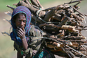 GONDAR/ETHIOPIA..On the road from Gondar to Bahar Dar..Woman with firewood..(Photo by Heimo Aga)