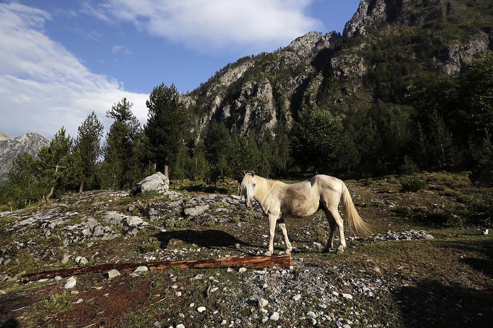A horse at Valbona valley, Albania.