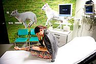 ROTTERDAM - Een vrouw laat een scan rontgenfoto van haar gebroken hand maken op de eerste hulp afdeling van een ziekenhuis . COPYRIGHT ROBIN UTRECHT