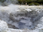 Devil's Ink Pots get their grey color from small amounts of natural graphite and crude oil percolated up from the depths, at Wai-O-Tapu Thermal Wonderland, North Island, New Zealand