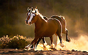 Horses Running in the Desert near Tucson, Arizona