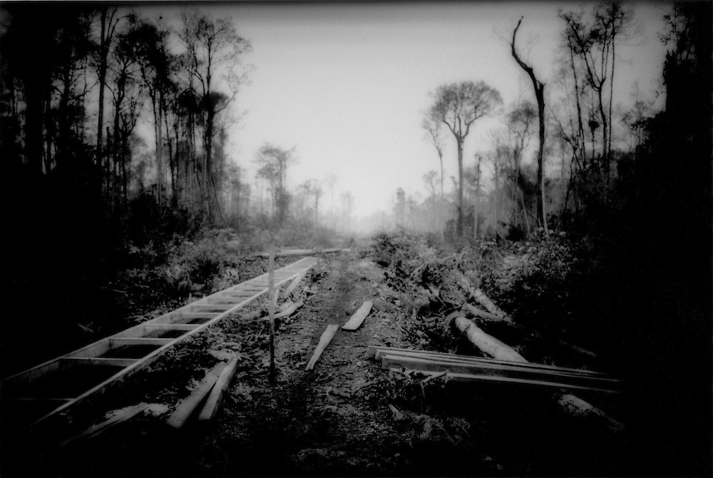 Death Throes of a Great Rainforest - Intentionally burnt forest., West Kalimantan (Borneo), Indonesia. -.Intentionally burnt forest to clear land for transmigrants' plantation from the neighboring islands of Sulawesi & Madura immediately adjacent to Gunung Palung Nat'l Pk., West Kalimantan (Borneo), Indonesia.