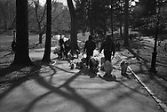 Dog walkers near Cedar Hill (Dog Hill) in Central Park