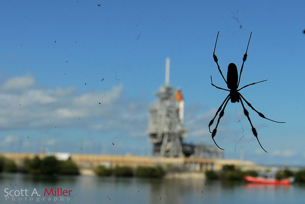 Nov. 3, 2010; Cape Canaveral, Fla.:  A spider is silhouetted against Space Shuttle Discovery sits on launch Pad 39-A prior to it's scheduled Nov. 4, 2010 launch to the International Space Station. Discovery will deliver and install the Permanent Multipurpose Module, the Express Logistics Carrier 4 and provide critical spare components to the International Space Station. This will be the 35th shuttle mission to the station...©2010 Scott A. Miller