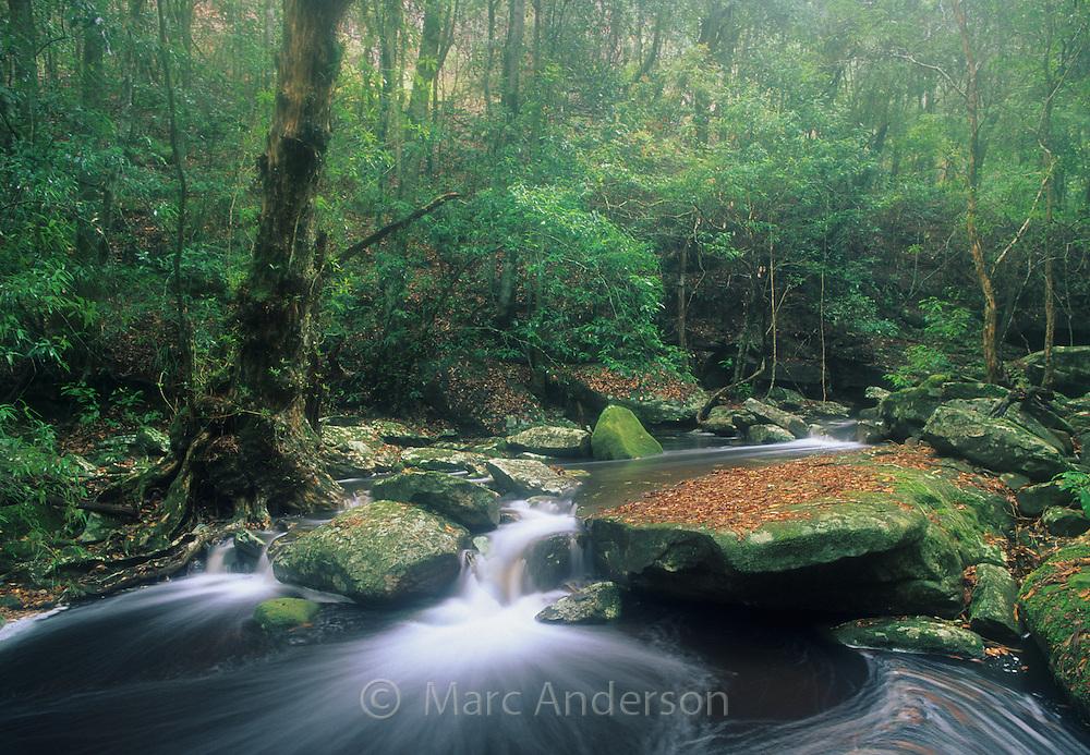 Beautiful flowing rainforest creek, Royal National Park, Australia