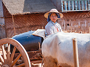 Countryside woman on cart pulled by buffaloes
