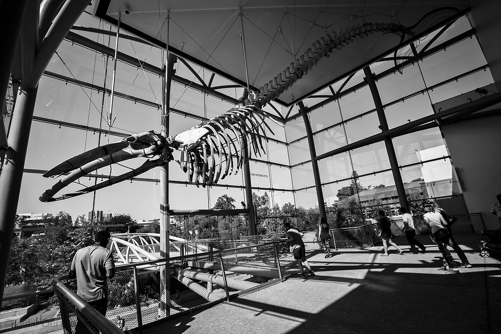 Whale skeleton at the Natural History Museum of Los Angeles County