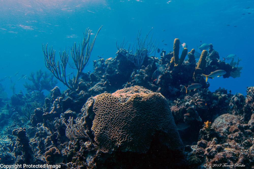 Peaceful scene at a Cayman Brac reef