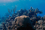 Peaceful scene at a Cayman Brac reef