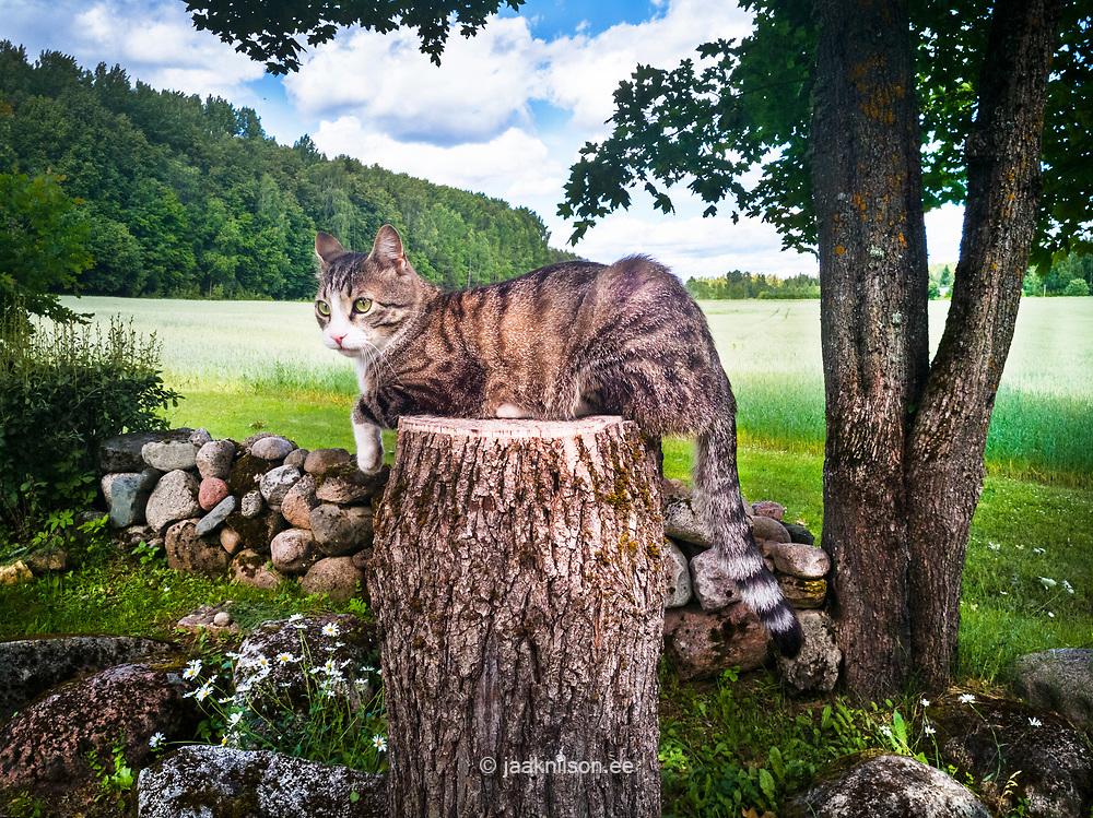 Cat sitting on tree-trunk