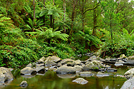 Oceania; Australia; Australian; Down Under; Victoria; Great Otway National Park, Forest canyon at Stevensons Falls