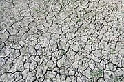 Nederland, Nijmegen, 4-8-2018Door de aanhoudende droogte hebben mens en natuur het moeilijk . Doordat regenval uitblijft worden de waterbuffers kleiner en moet het waterpeil van o.a. het IJsselmeer verhoogd worden om aan de vraag, behoefte te voldoen . Gebarsten, gescheurde, grond, bodem van een lege poel, waterpoel . .Foto: Flip Franssen