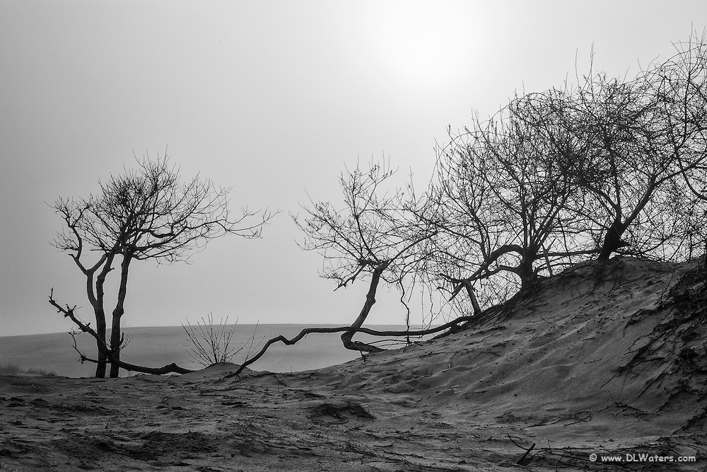 Moody black and white photo of Jockey's Ridge State Park in Nags Head on the Outer Banks. Jockey's Ridge is the largest sand dune on the East Coast.
