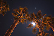 Palm Trees and Stars at Night in California