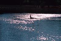 A rower moves across the sun dappled waters of Wascana Lake, Regina Saskatchewan