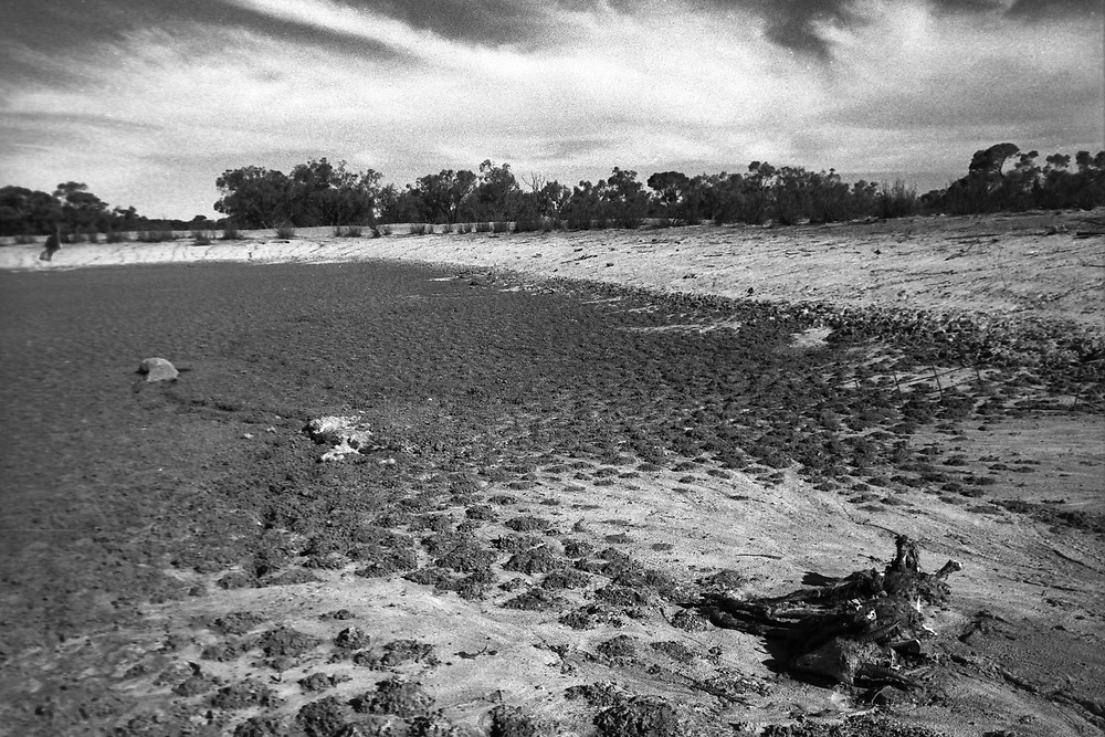 The Thompson family living through drought on their cattle and sheep farm in the far west of NSW, Australia.  2005.