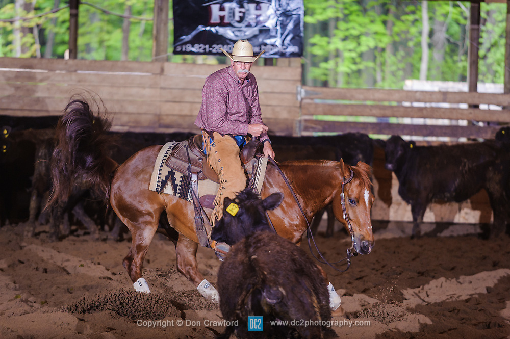 May 21, 2017 - Minshall Farm Cutting 4, held at Minshall Farms, Hillsburgh Ontario. The event was put on by the Ontario Cutting Horse Association. Riding in the Non-Pro Class is Steve Neville on Peppy Bag O Lena owned by the rider.