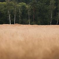 Thetford forest