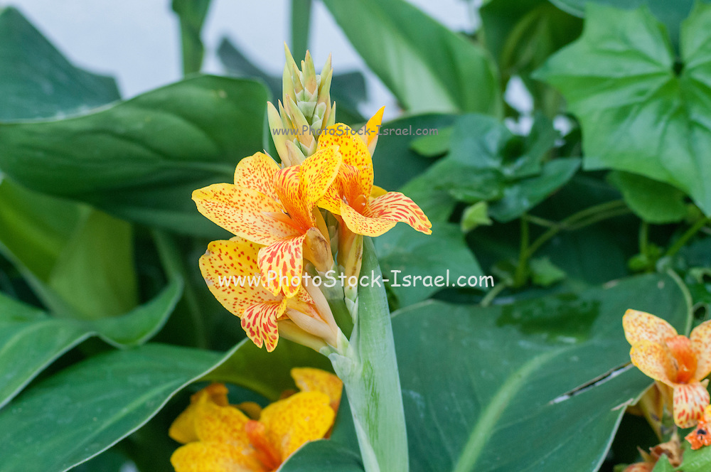Flowering Orange Garden plants