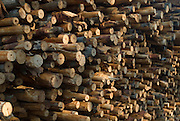 Wood for a Charocoal kiln.